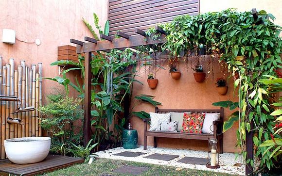 plantas para pergolados