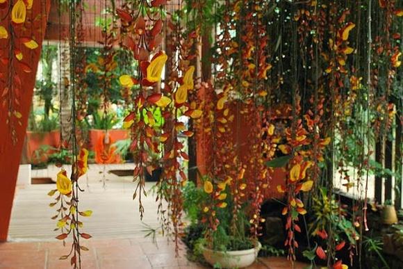 plantas para pergolados de madeira